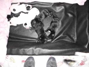 sei cuccioli