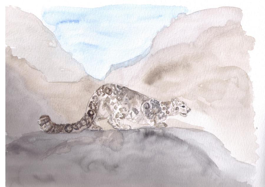 leopardo_delle_nevi