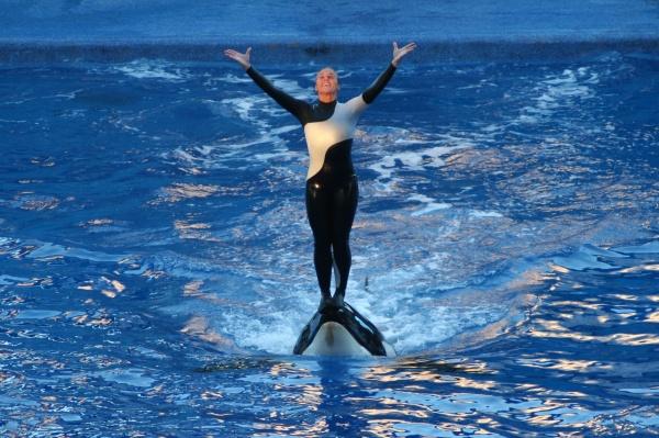 dawn-brancheau-orca-seaworld