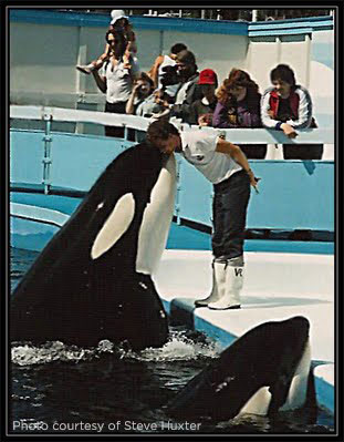 tilikum-at-sealand-of-the-pacific.jpg