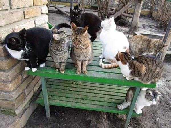 felix-cat-shelter-1