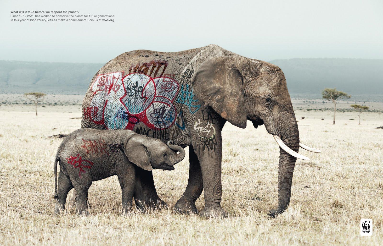 elephant1 wwf