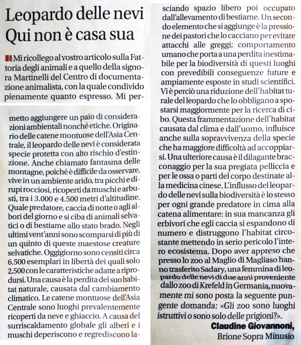 Claudine leopardo delle nevi corriere 5.3.2019