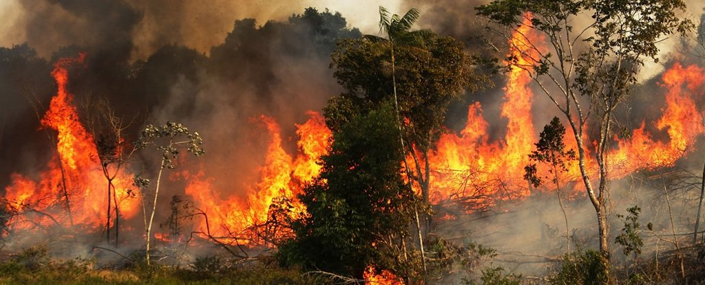 AmazonRainforestBurningAtRecordRates