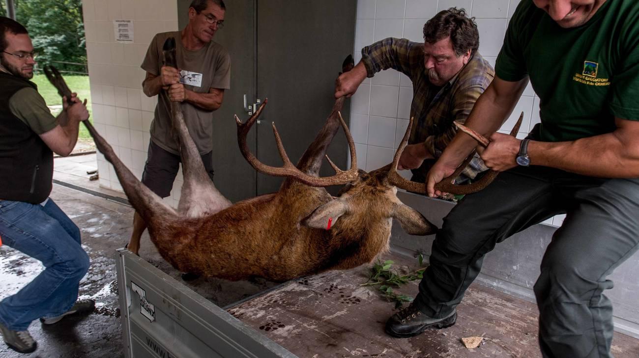 Positivo il bilancio della caccia alta in Ticino quest'anno a settembre