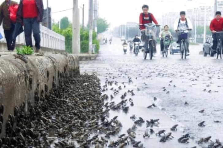 Anfibi sulle strade in Cina