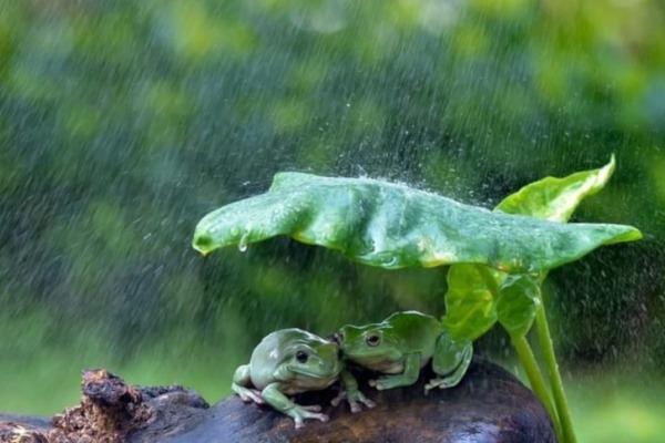 ronocchie sotto la pioggia